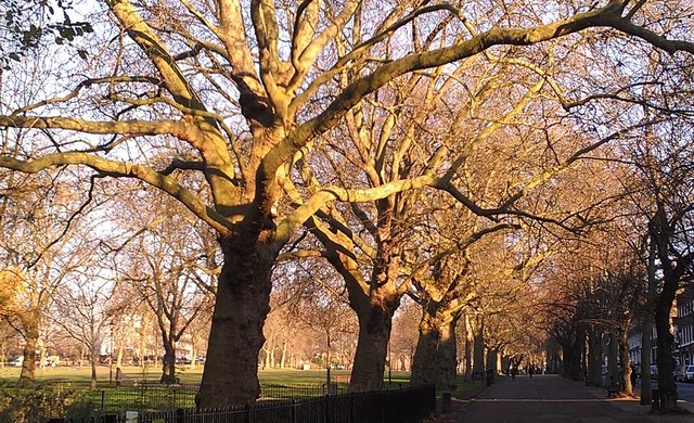Highbury Fields -Londres Inverno